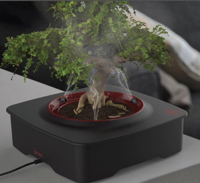 Un Bonsai Nella Nebbia Arriva Il Vaso Spa Che Toglie Lo Stress A